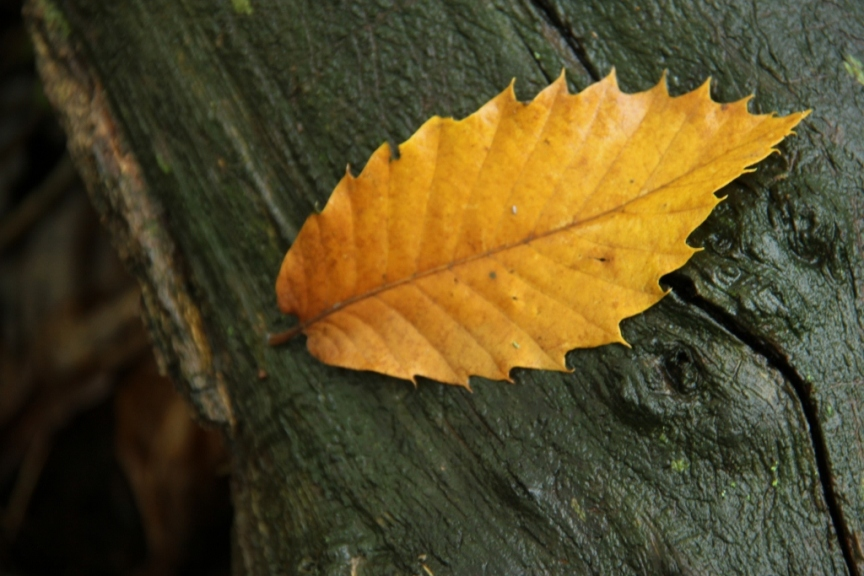 Yellow leaf on a wet tree trunk