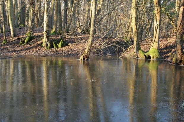 The frozen pond (1024x683)