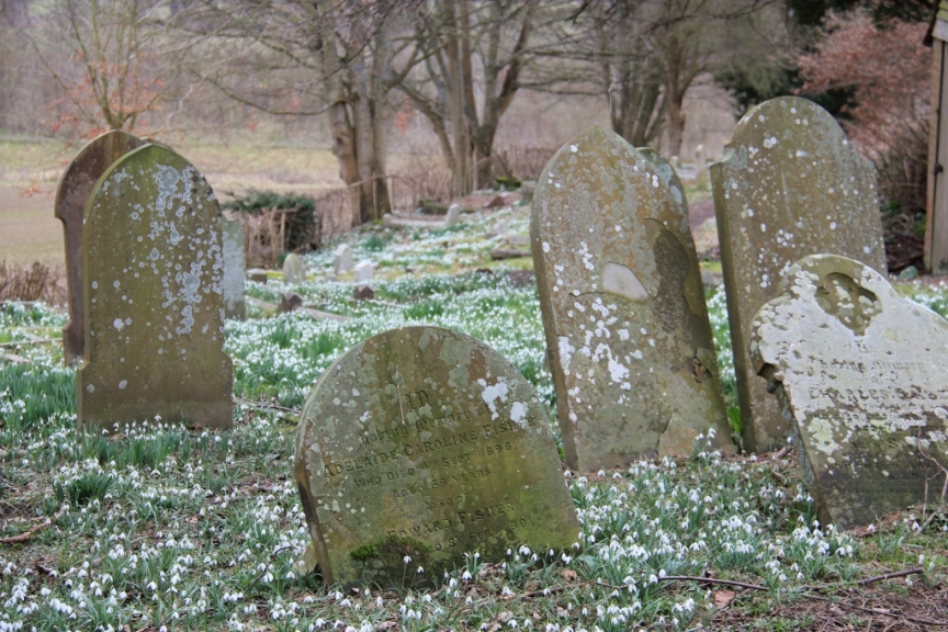 Snow drops in a church yard