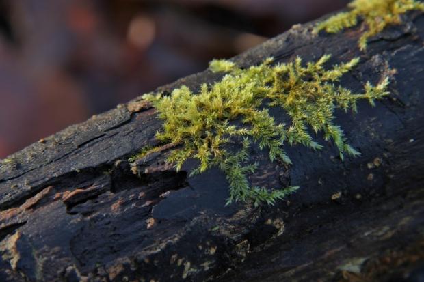 Moss on a fallen tree (1024x683)