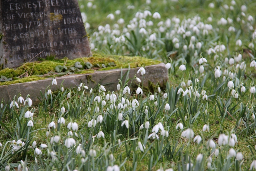Snowdrops in a church yard II (1024x683)