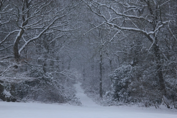 A snowy path in a woodland
