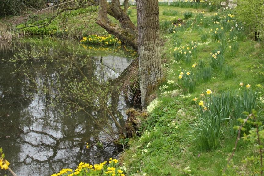 pond (1024x683)
